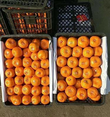 湖南省湘西土家族苗族自治州龙山县纽荷尔脐橙 60 - 65mm 4-8两