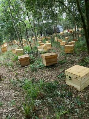 广西壮族自治区玉林市容县土蜂蜜 塑料瓶装 95%以上 2年
