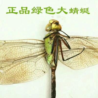 安徽省亳州市谯城区蜻蜓