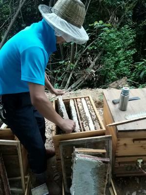 江西省赣州市南康区土蜂蜜 塑料瓶装 98% 2年以上