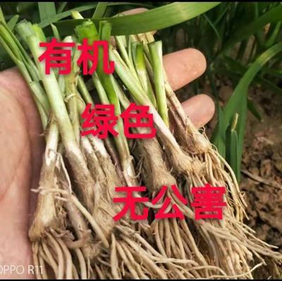山东省济南市历下区韭菜根
