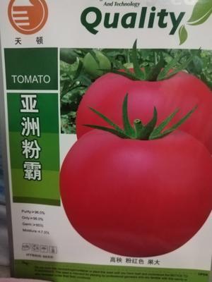 这是一张关于粉果番茄种子 ≥85% ≥96% 杂交种的产品图片