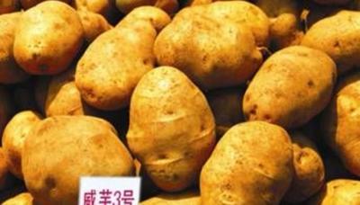 这是一张关于白土豆 3两以上的产品图片