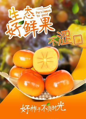 陕西省咸阳市礼泉县脆柿 3 - 4两以上