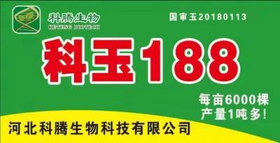 河南省安阳市滑县玉米种子 ≥97% ≥99% ≥99.9% 常规种 ≤13%