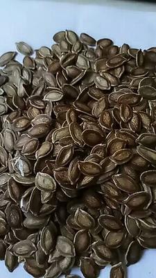 山东省济南市历城区香如蜜种子