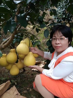 广西壮族自治区玉林市容县沙田柚 2斤以上