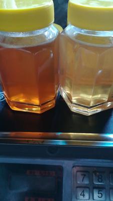 黑龙江省黑河市逊克县椴树蜜 塑料瓶装 100% 2年以上