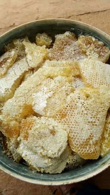 云南省西双版纳傣族自治州勐海县野生蜂蜜 塑料瓶装 100% 2年以上