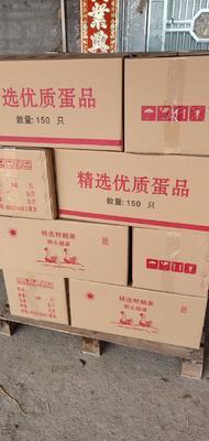 广东省肇庆市高要市鲜鹅蛋 食用 箱装