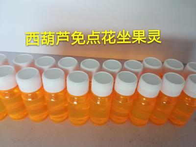 山东省潍坊市寿光市绿皮西葫芦 0.4斤以上