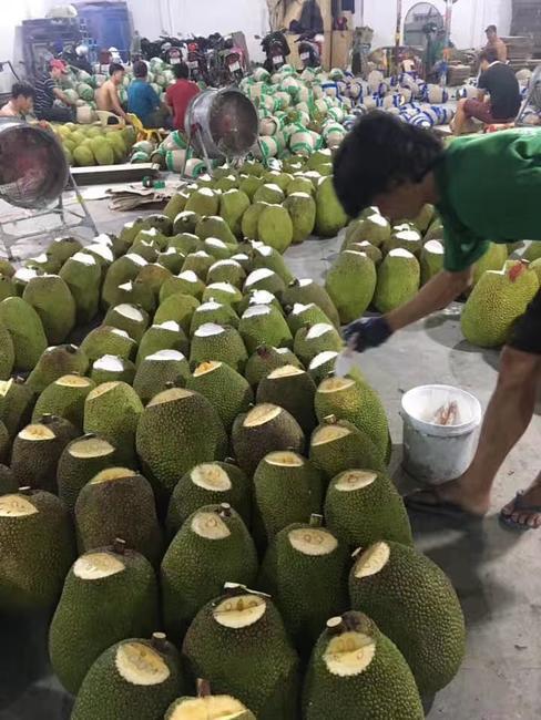 越南菠萝蜜 10斤以下