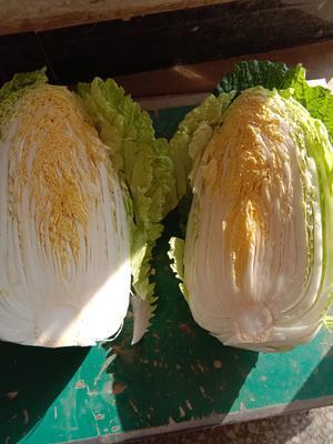 湖北省荆门市钟祥市超级黄心菜