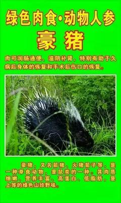 湖北省恩施土家族苗族自治州咸丰县中华豪猪 20-30斤