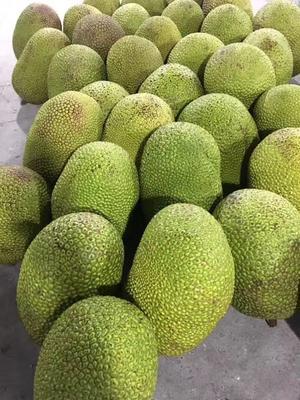 这是一张关于越南菠萝蜜 10斤以下的产品图片