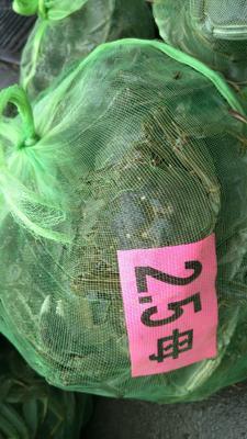 这是一张关于阳澄湖大闸蟹 2.0两以下 母蟹的产品图片