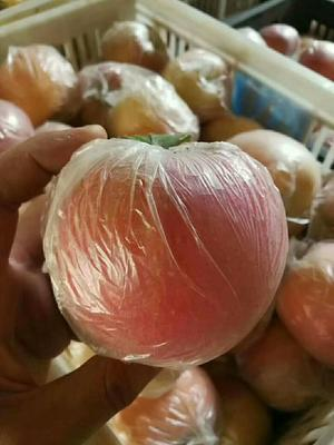 这是一张关于红富士苹果 膜袋 片红 70mm以上的产品图片