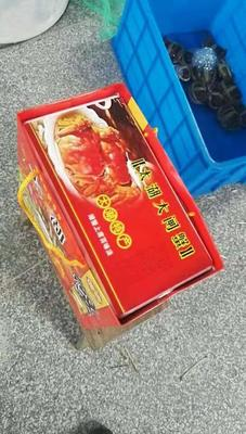 江苏省常州市武进区太湖河蟹 4.0两 公蟹