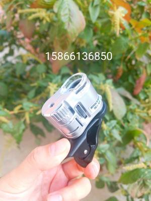 山东省潍坊市奎文区手机显微镜