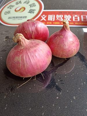 河北省邯郸市永年县紫皮洋葱 5~8cm 紫皮 4两以上