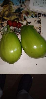 河南省郑州市中牟县灯泡绿茄子 5两以上