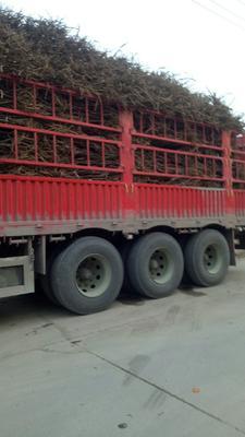 安徽省亳州市谯城区观赏牡丹 12~14cm 4cm以下 0.5~1米