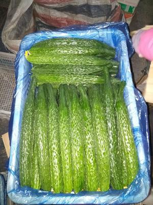 内蒙古自治区赤峰市宁城县油亮密刺黄瓜 30cm以上 鲜花带刺