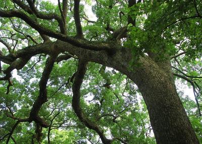 安徽省芜湖市三山区樟木