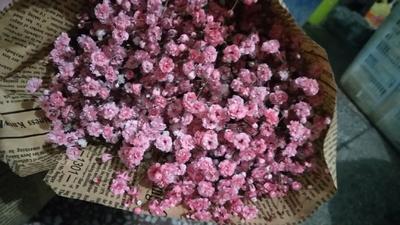 云南省昆明市呈贡区满天星