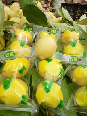 安岳柠檬 1.6 - 2两