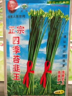 四川省成都市成华区韭菜种子