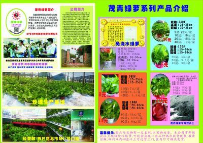 广西壮族自治区柳州市柳北区绿萝