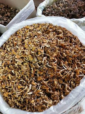 黑龙江省牡丹江市穆棱市蘑菇