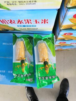 辽宁省朝阳市朝阳县水果玉米 黄粒 鲜货