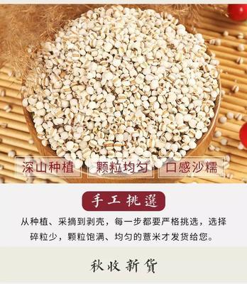 河北省邯郸市复兴区土薏仁