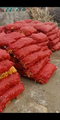 吉林省四平市铁东区爆裂玉米 霉变≤1% 净货
