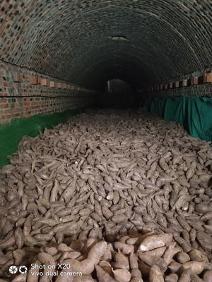 山东省济宁市邹城市富硒紫薯 混装通货