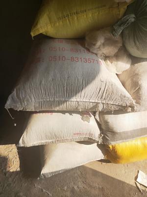 安徽省合肥市肥东县普通棉籽