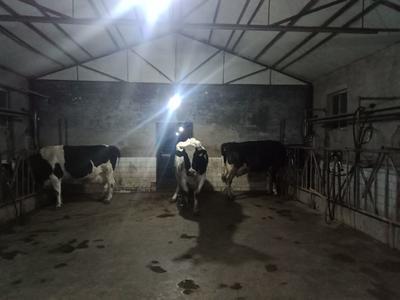山西省太原市晋源区牛奶 15天 冷藏存放