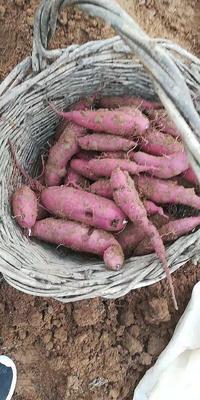 山东省泰安市肥城市紫罗兰紫薯 混装通货