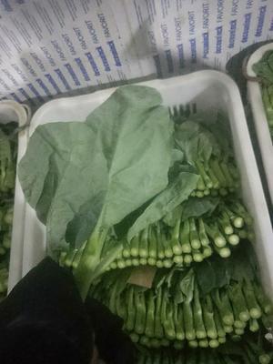 广东省惠州市博罗县广州芥兰 9~12cm