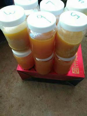 云南省大理白族自治州巍山彝族回族自治县土蜂蜜 塑料瓶装 100% 2年以上