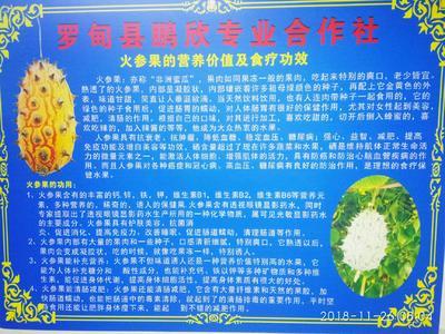 贵州省黔南布依族苗族自治州罗甸县火参果 0.5斤以上