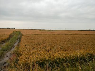 这是一张关于富硒水稻 晚稻的产品图片
