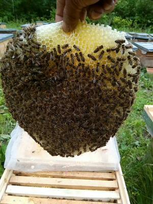 黑龙江省牡丹江市穆棱市蜂巢蜜 盒装 100% 2年以上