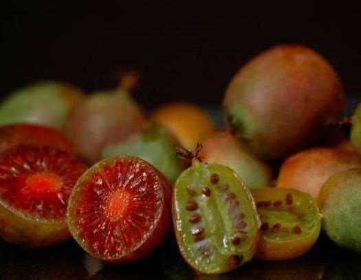 软枣猕猴桃苗 包品种,多个品种,魁绿,赤焰,龙城,红色九月………