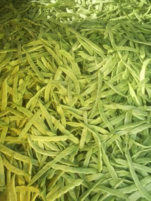 云南省楚雄彝族自治州元谋县绿扁豆 2cm以上 15cm以上