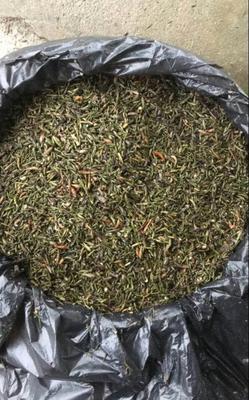 江苏省南京市高淳区轮叶黑藻