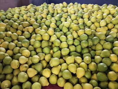 广东省梅州市梅县区沙田柚 2.5斤以上