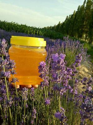 新疆维吾尔自治区伊犁哈萨克自治州霍城县薰衣草蜂蜜 塑料瓶装 90%以上 2年